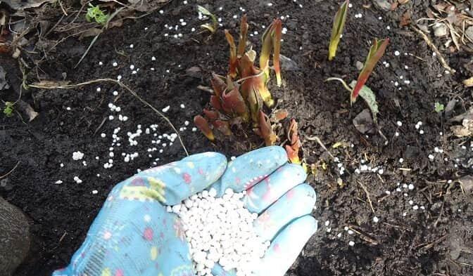 Подкормка цветов на даче весной: выбор удобрений и правила внесения