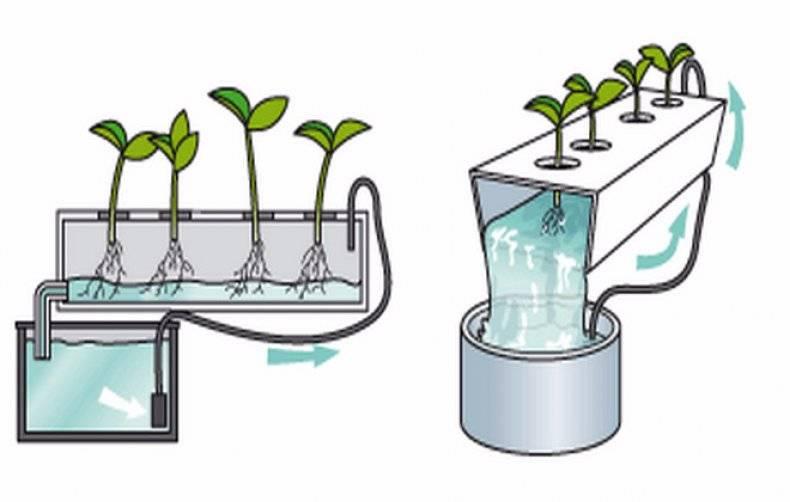 Неприхотливый комнатный многолетник филодендрон: уход в домашних условиях и содержание красивого вечнозеленого растения