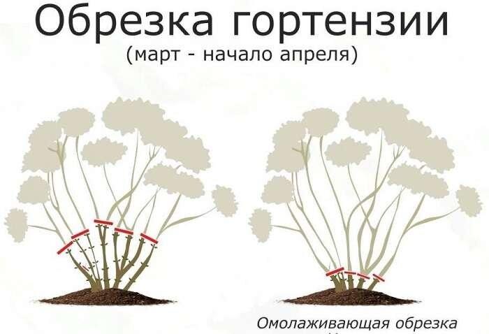Как размножить спирею? 16 фото размножение отводками. как рассадить спирею делением куста осенью или в другое время?