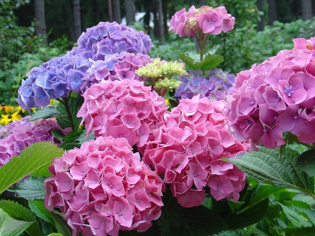 садовые кустарники цветущие фото с названиями