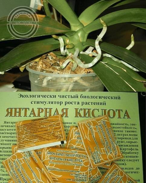 Янтарная кислота для орхидеи: когда можно применять, а также инструкции, как развести водой таблетки и порошки, чтобы полить и подкормить комнатное растение