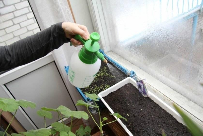 Как поливать гортензию садовую правильно
