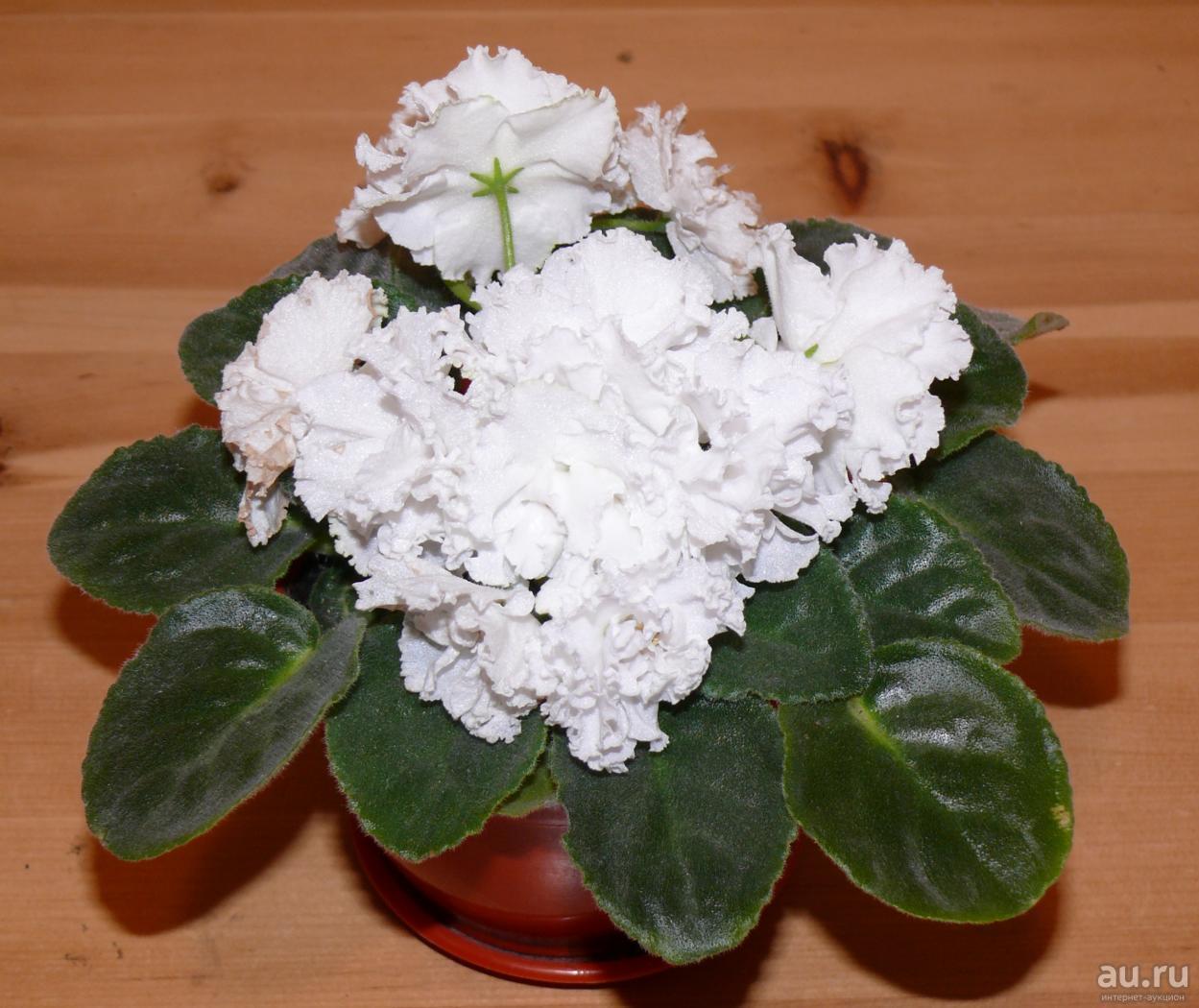 Букет роуз: крупнолистная садовая гортензия, описание, уход и выращивание