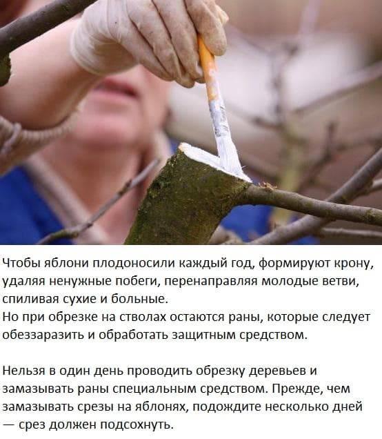Чем замазать спил на яблоне. замазываем раны и спилы у деревьев правильно