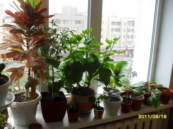 Уход за суккулентами: полив, посадка, грунт, удобрения и другие условия цветения
