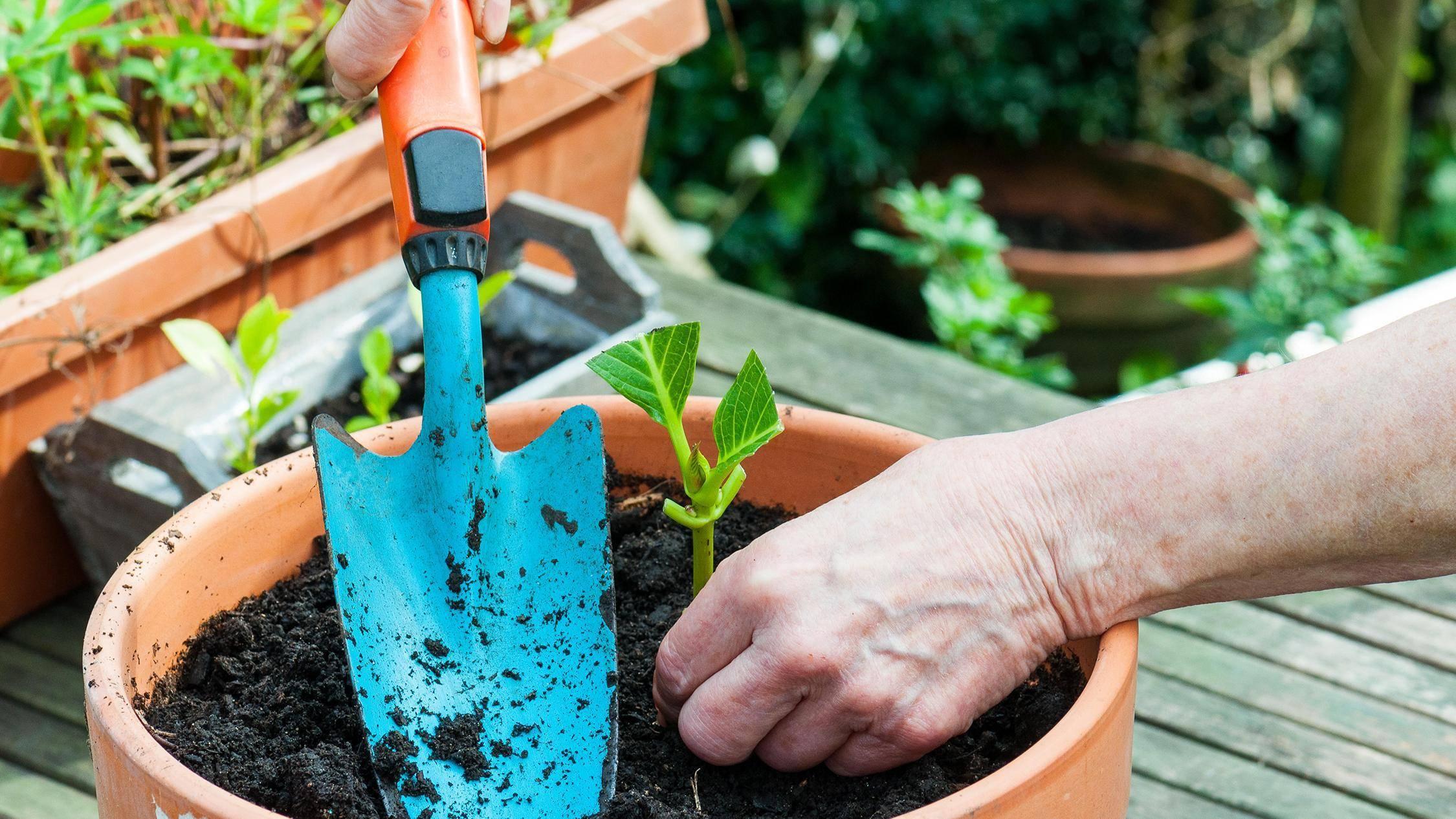 Как подкислить почву для гортензии: 2 совета и 6 способов