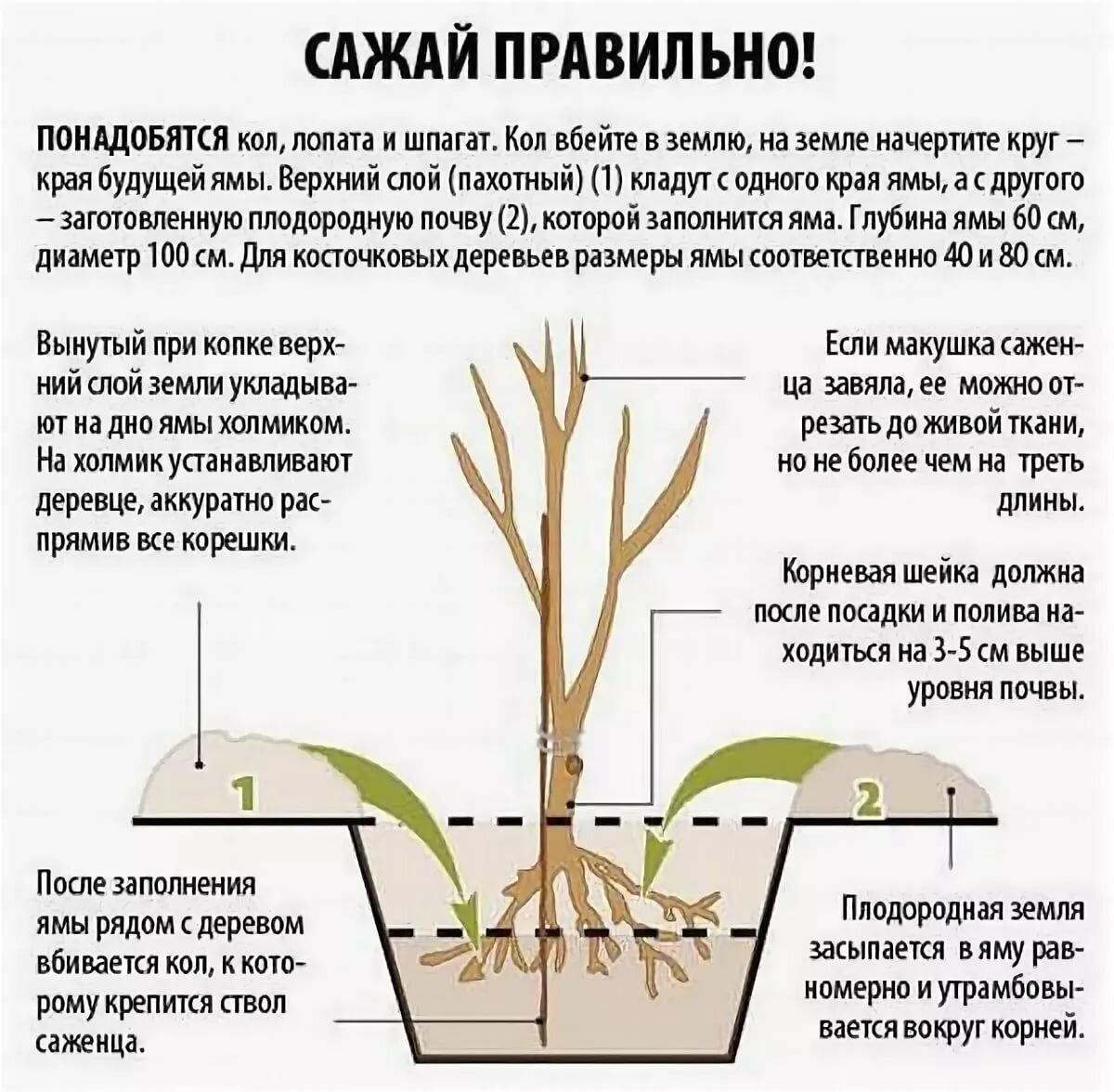 Монарда в вашем саду. сорта, посадка, уход и размножение в открытом грунте