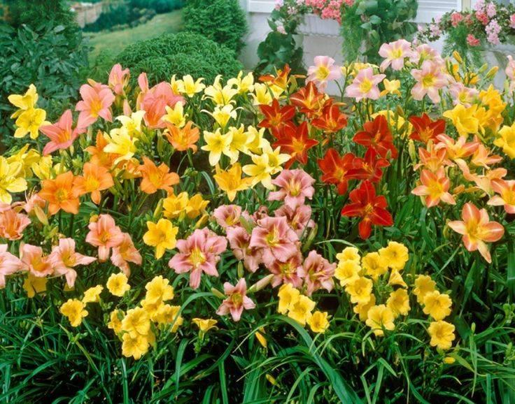 Первые весенние цветы: фото, названия и описания первоцветов