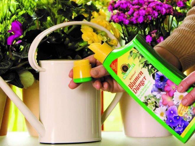 Сорта ампельных фуксий, посадка на улице, выращивание и уход в домашних условиях