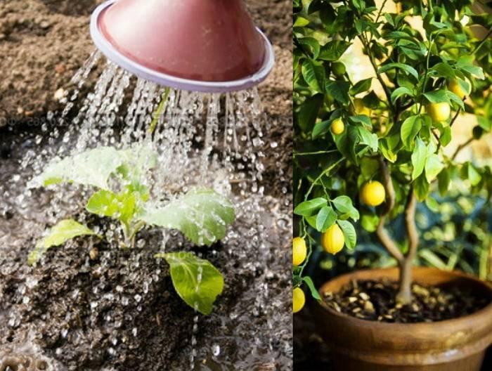 Как посадить и ухаживать за барбарисом в открытом грунте: полив, удобрение