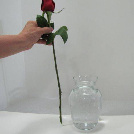 Как сохранить розы в вазе дольше: хранение букета срезанных роз