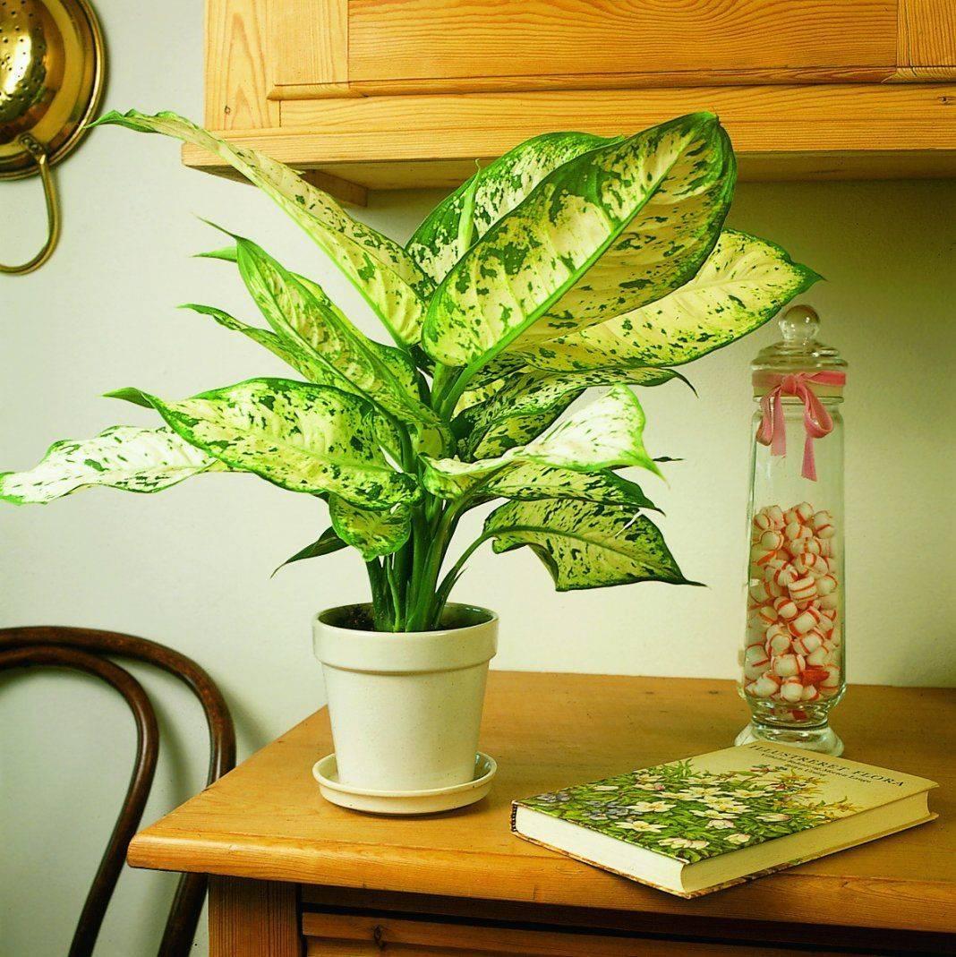 Какие комнатные цветы нельзя держать дома: фото и названия, почему, приметы, незамужней девушке, аллергикам