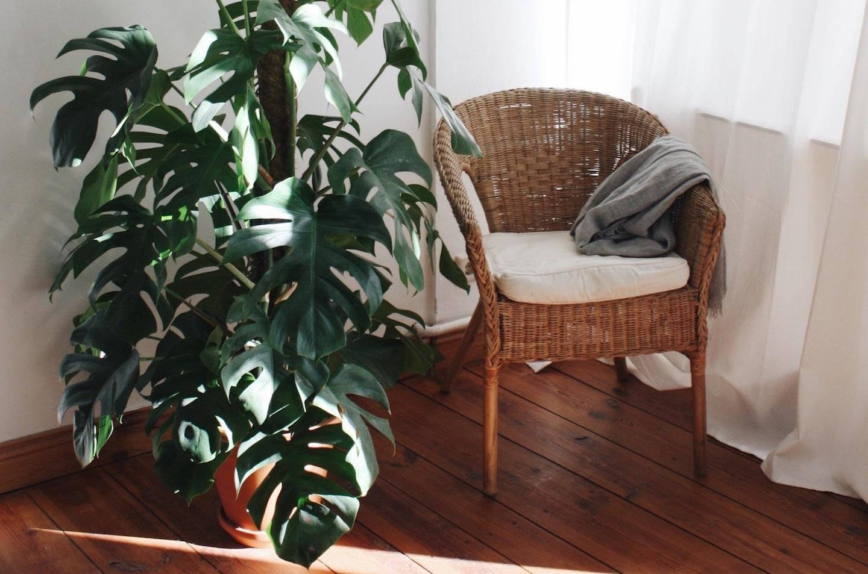 Подбираем комнатные растения для выращивания в теплых, прохладных, светлых и темных помещениях