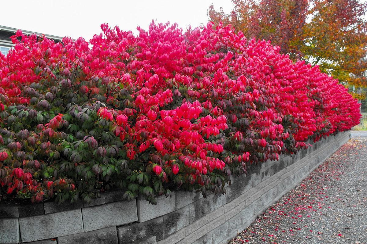 красивоцветущие кустарники для сада фото уже опять