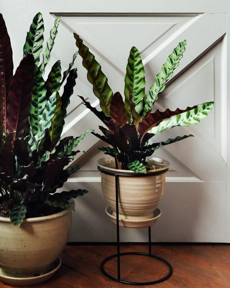 Комнатные растения: тенелюбивые и неприхотливые