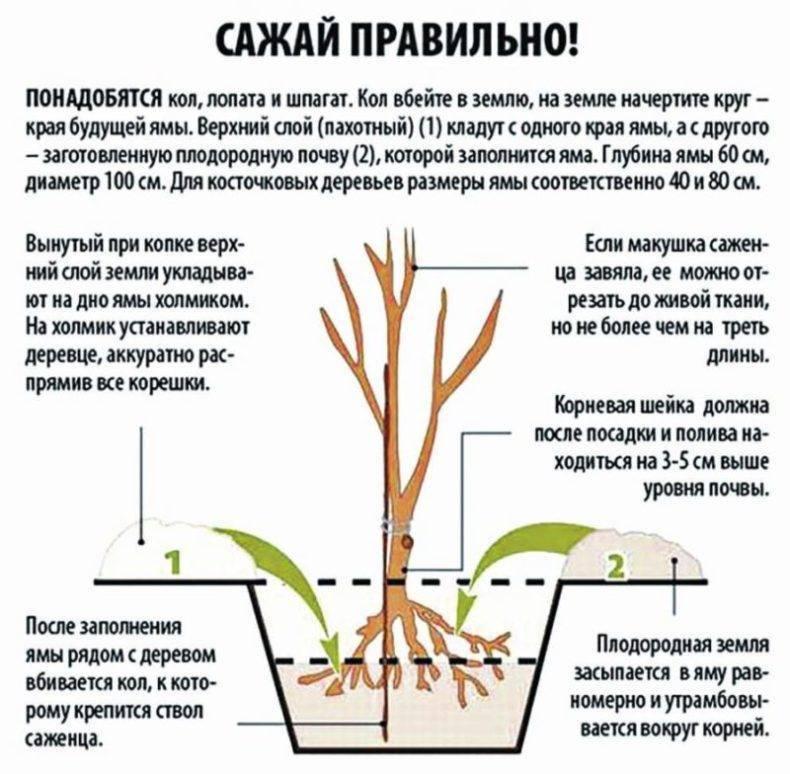 Мульчирование роз летом: как правильно сосновой корой, опилками и скошенной травой