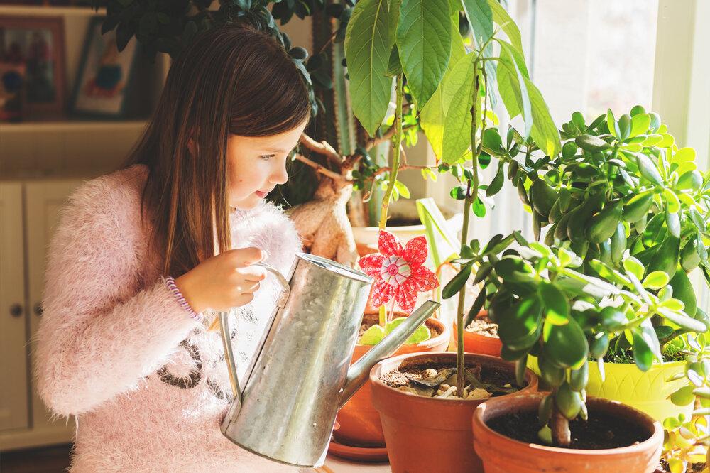 Ирис японский (35 фото): посадка и уход в открытом грунте, описание цветов вариегата и «эйлинс дрим»