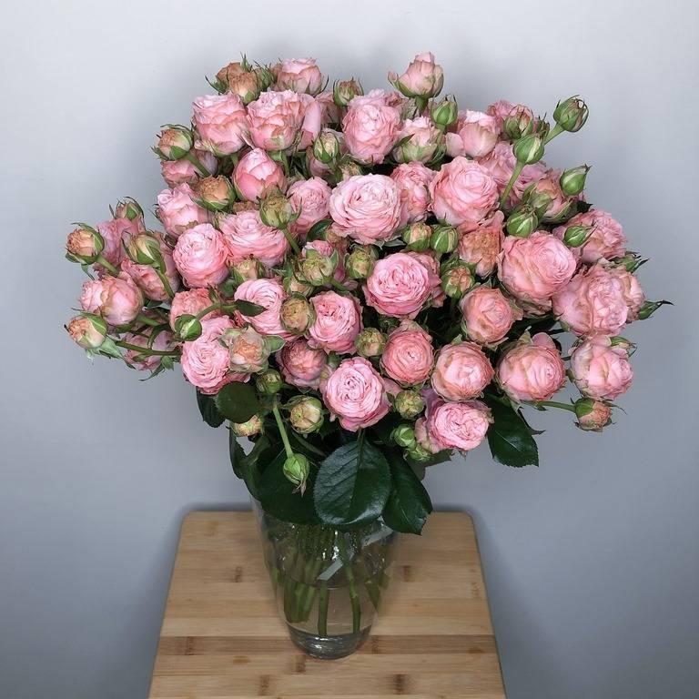 Характеристика пионовидных роз бомбастик