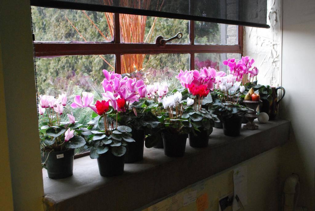 Можно ли в спальне держать комнатные растения? 51 фото: какие цветы благоприятные для спальной комнаты, можно ли орхидеи или фикус, какие лучше всего