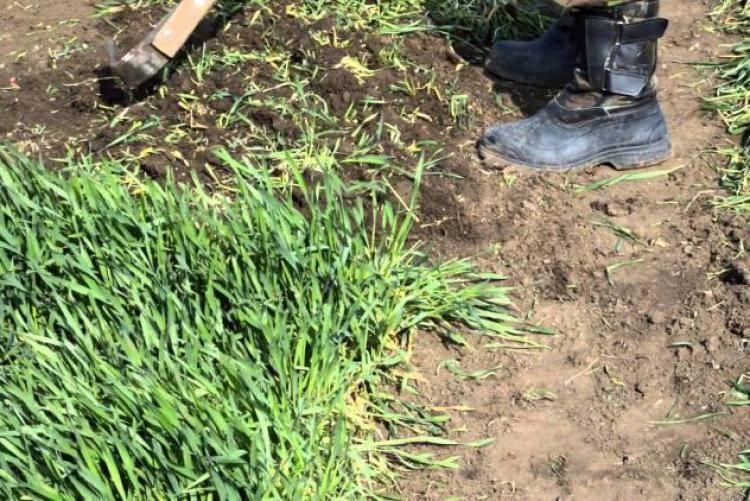 Все о люпинах: как и когда правильно сажать в открытый грунт, выращивание из семян