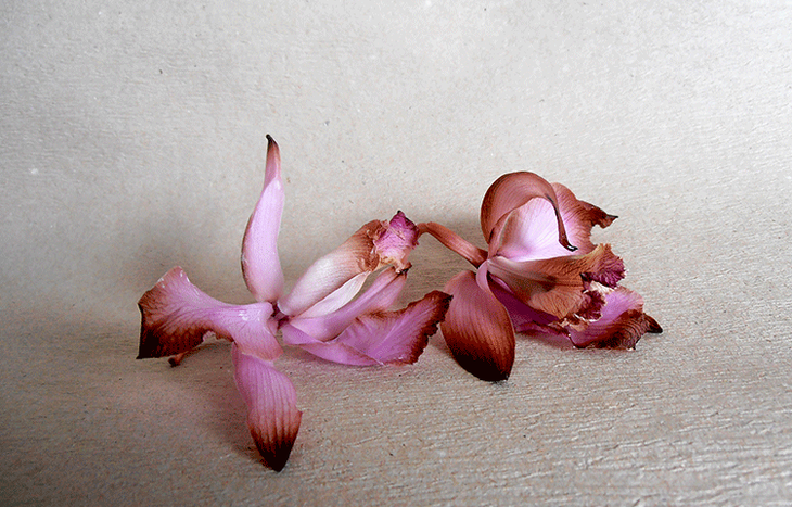 Если у орхидеи опали цветы: почему это происходит и как помочь растению?