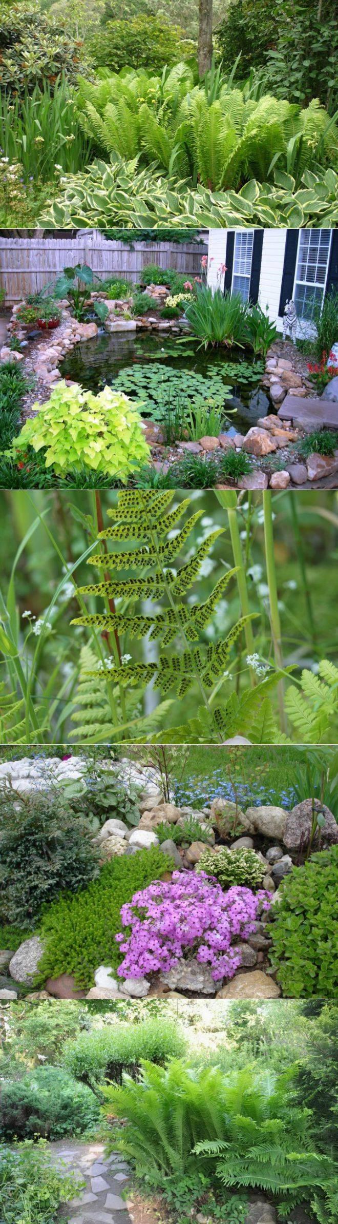 Как вырастить чудесный папоротник в собственном саду?
