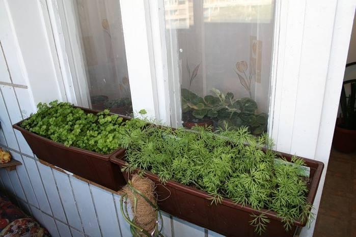 9 видов полезной зелени на подоконнике, выращиваем к новому году!