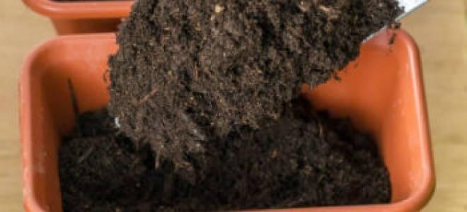 Какую почву любит спатифиллум, как сделать грунт самостоятельно? рекомендации по выбору готовых смесей