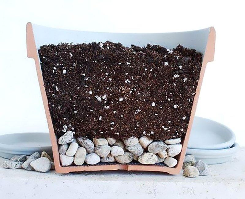 Особенности выращивания антуриумов в домашних условиях