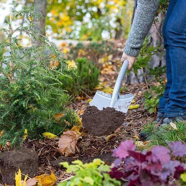 Как правильно вырастить из семян летний адонис