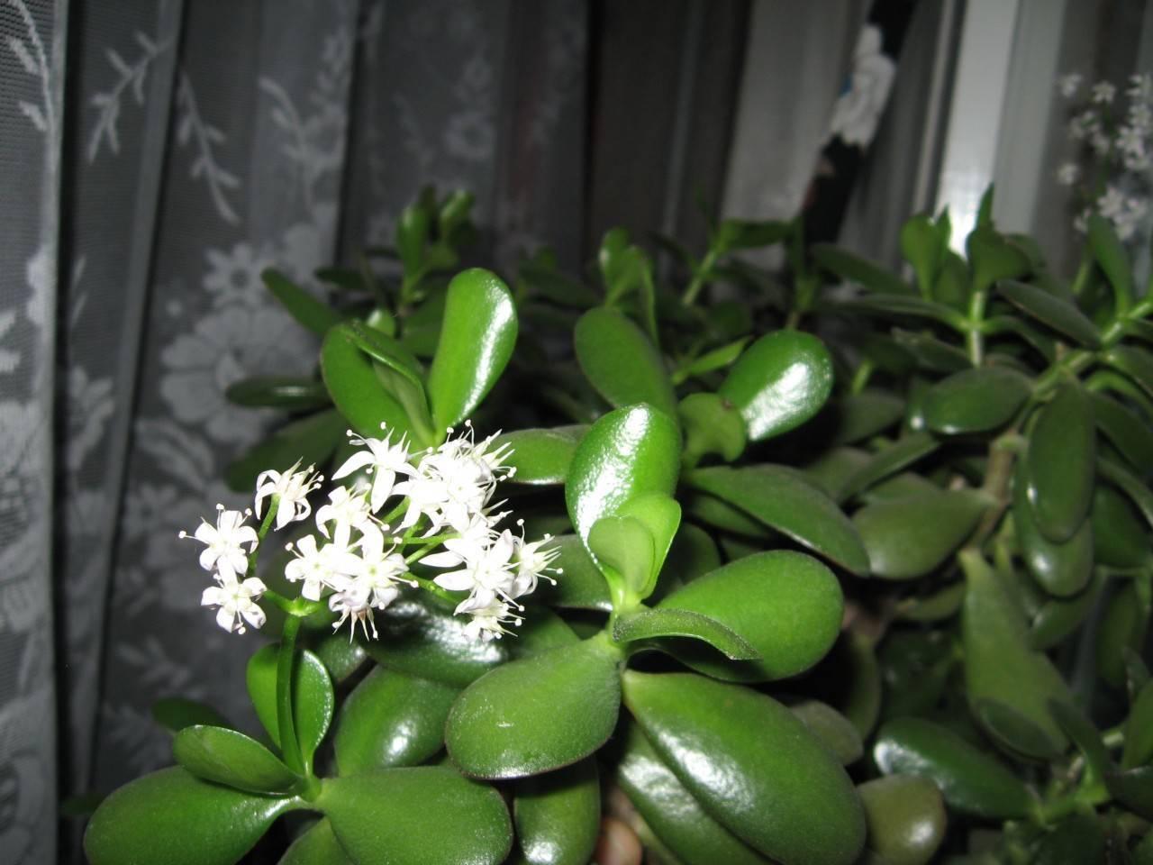 Фен-шуй: комнатные цветы, приносящие счастье и благополучие