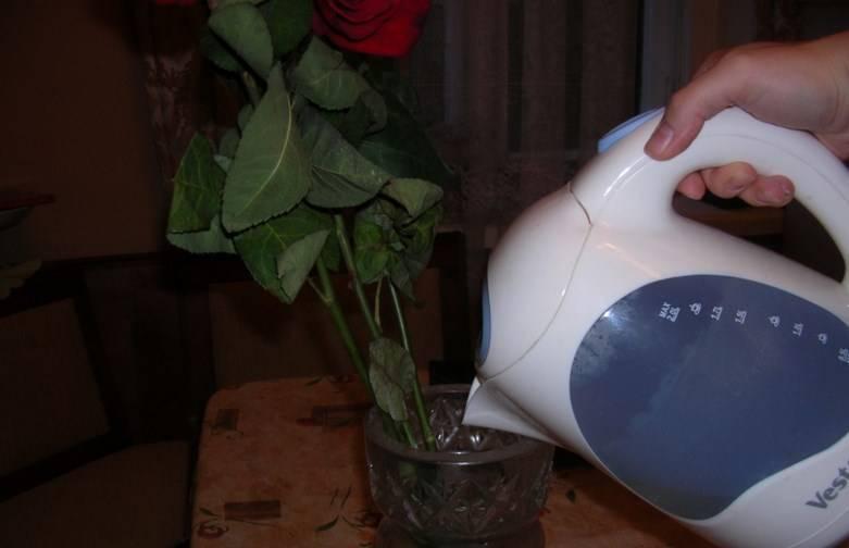 Как реанимировать розы в вазе с водой – 7 способов оживить букет