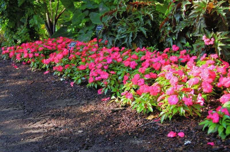 Что можно посадить рядом с хвойными – примеры удачных сочетаний растений
