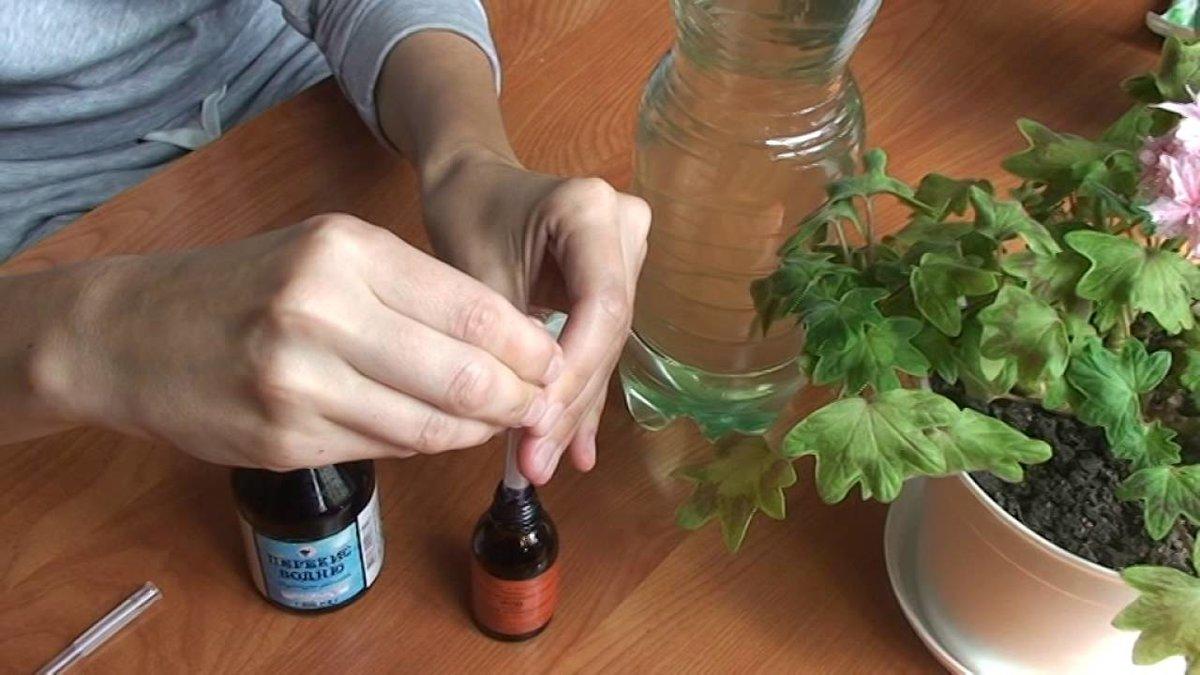 Чем подкормить герань? какими народными средствами ее подкармливать? лучшие удобрения и подкормка для обильного цветения и пышной листвы. чем поливать герань, чтобы не желтели листья?