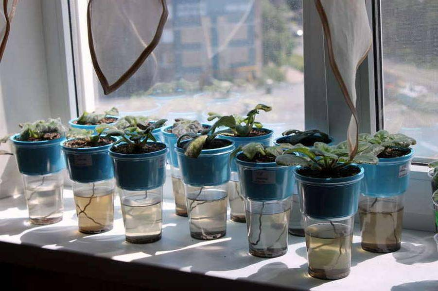 О вариантах полива комнатного растения в отсутствии хозяев на время отпуска