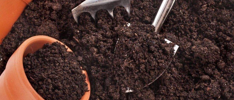Какая почва нужна для каланхоэ? рекомендации, как подобрать грунт цветку