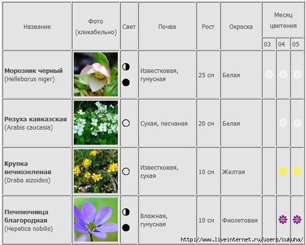 Когда цветет гортензия — период цветения, сколько времени она цветет - pocvetam.ru