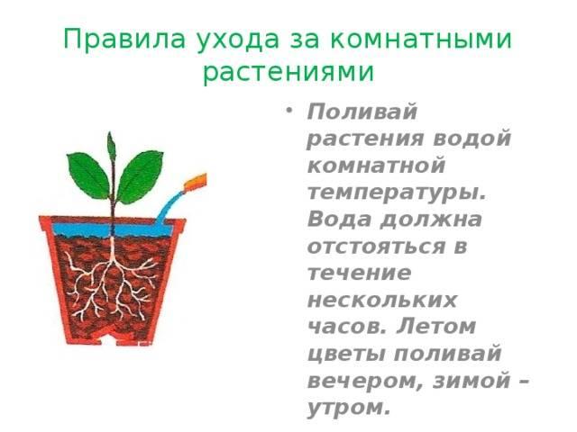 Кордилина цветок: уход в домашних условиях и способы размножения