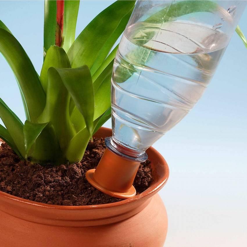 Неприхотливое тропическое растение кордилина прямая: правила ухода в домашних условиях