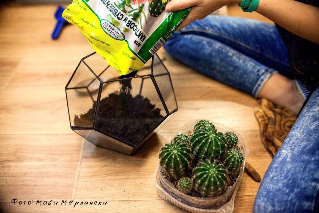 Пересадка кактусов: подбираем грунт, горшочек, осматриваем корни. как посадить кактус
