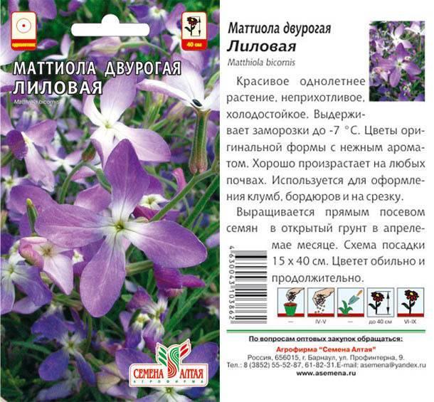 Маттиола: описание, виды и сорта, использование в ландшафтном дизайне