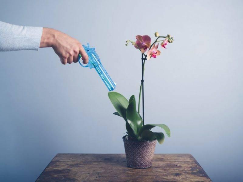 Орхидея фаленопсис в домашних условиях: сколько цветет времени, как часто на протяжении года бывает этот период, а также что делать, когда бутонов очень долго нет?
