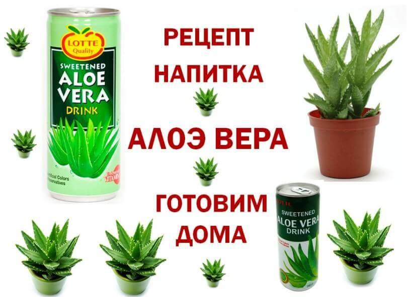 Алоэ: полезные свойства растения и способы его применения