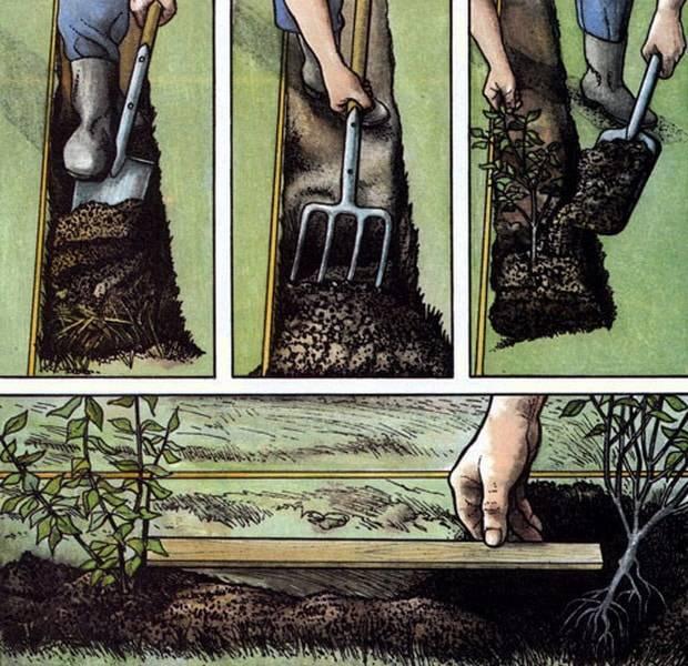 Калган, лапчатка прямостоячая корень лечебные свойства