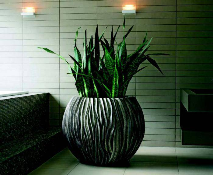 Многолетние тенелюбивые растения для сада