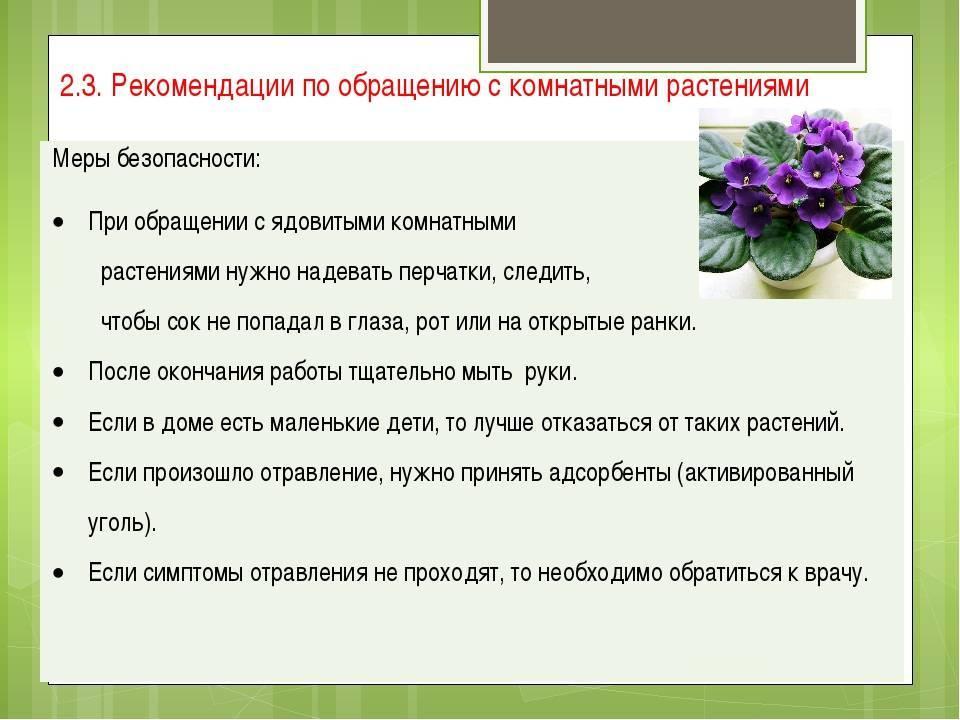 Ядовитые комнатные растения, опасные для человека