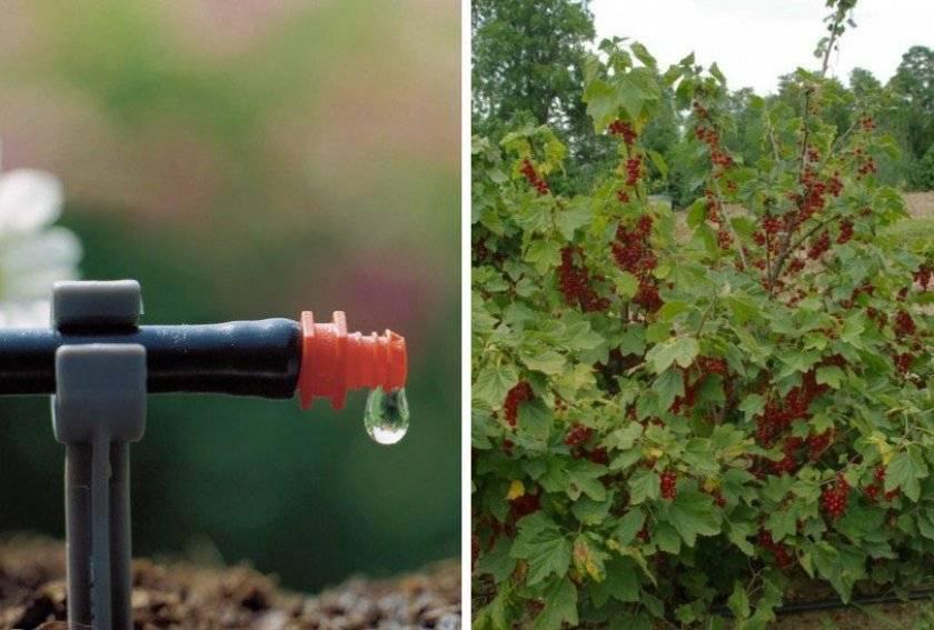Как правильно поливать растения в огороде – советы для увеличения урожая