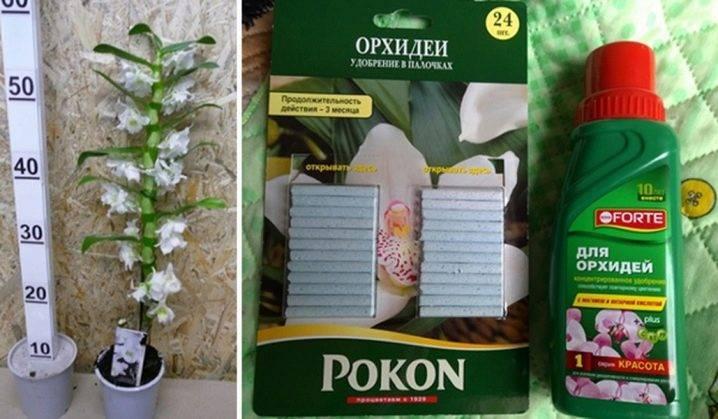 Удобрения для орхидей: разновидности, советы по выбору