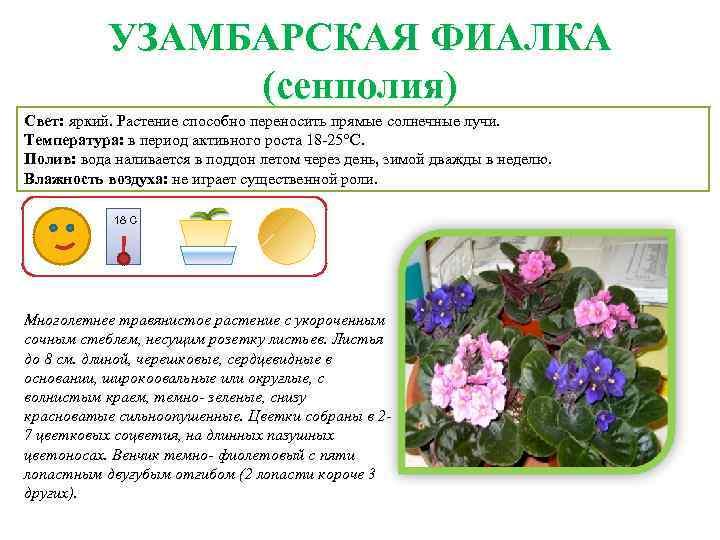 Рекомендации по правильному уходу за растениями