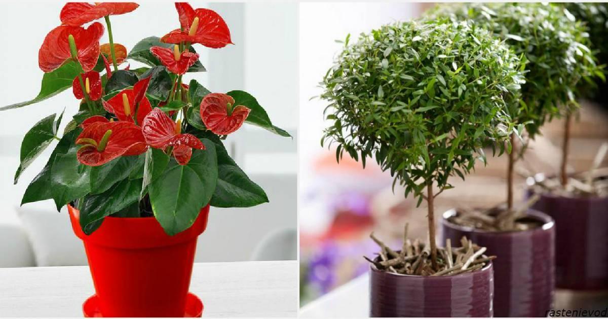 Топ-10 растений, приносящих богатство, счастье и деньги в дом